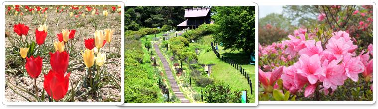 茶臼山自然植物園でのトレッキング