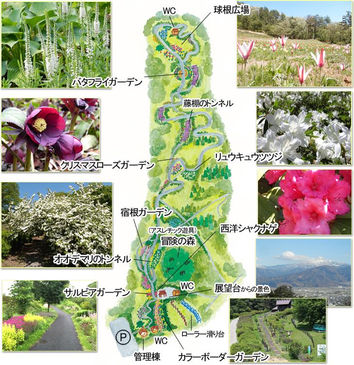 茶臼山自然植物園見取り図マップ
