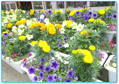 花育 学校支援プロジェクト